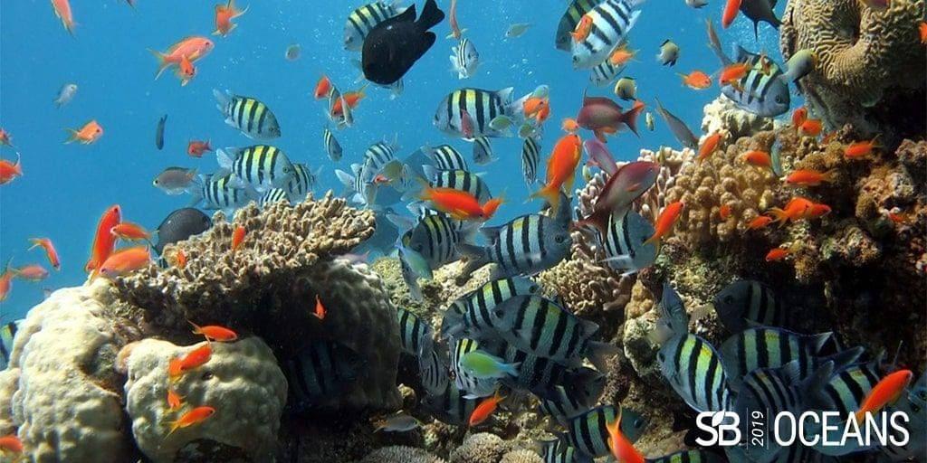 Sustainable Brands Oceans Global Summit: a conferência que vai ensinar os empreendedores a ajudar os oceanos